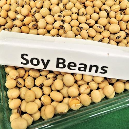 Afectiunile tiroidiene și dieta - consumăm soia
